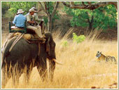 Elephant Safari, wildlife tour packages north india
