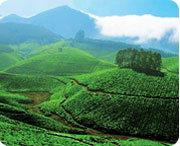 Munnar, travel to South india wildlife